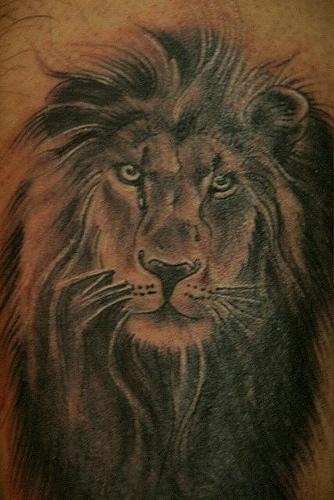 lion tattoos drawings