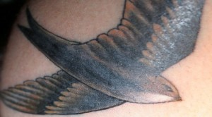 Swallow tattoo 3